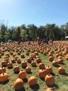 DuBois Farms Pumpkin Patch.